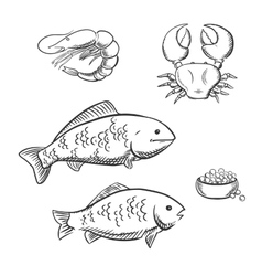 Fish shrimp crab and caviar sketches vector
