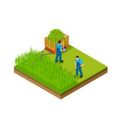 Hay season men mow grass make area for garden vector