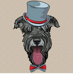 hipster dog Schnauzer vector image vector image