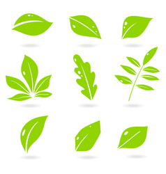 leaves icon set isolated on white vector image