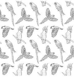 seamless pattern black line hand drawn parrot vector image