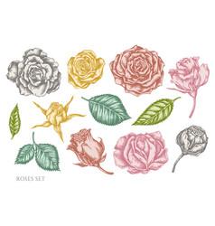 set hand drawn pastel roses vector image