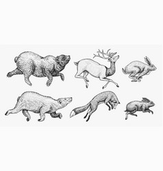 soaring hare rabbit northern brown bear deer set vector image