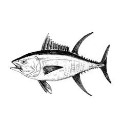 Yellowfin tuna fish collection vector