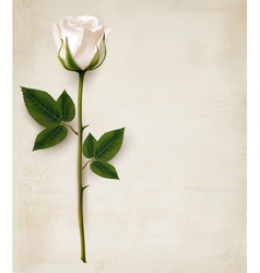 Happy Mothers Day background Single white rose on vector