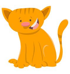kitten animal character vector image