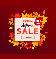 autumn sale banner with square frame fall leaves vector image
