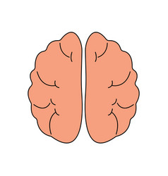 human brain front view icon hnternal organs vector image