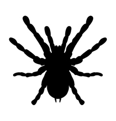 Insect in magnifier Brachypelma smithi spider vector