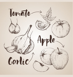 Handdrawn vegetables set vector