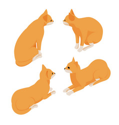 isometric red cat isolated on white background vector image