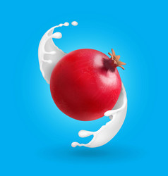pomegranate in milk splash garnet in yogurt vector image