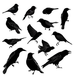 set of different wild birds silhouette vector image