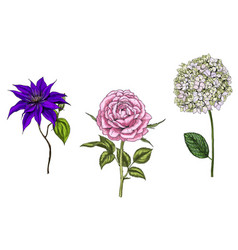 set with rose clematis and phlox flowers vector image