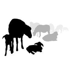 Sheep and Lamb vector image