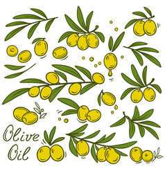 Vintage olive branches set vector