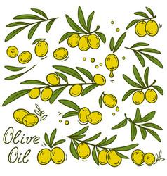 vintage olive branches set vector image