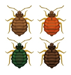 Bedbug Set on White Background vector