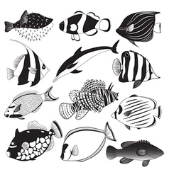 Marine Fish Collection vector image