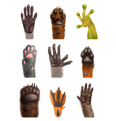 Realistic animal paw set vector