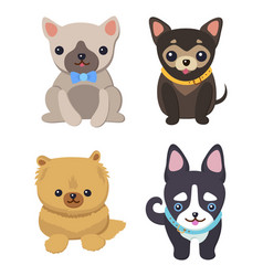 set of pictures with cute dogs vector image