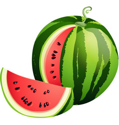 Sliced ripe watermelon isolated on white vector