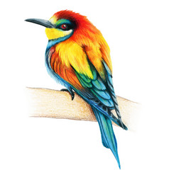 Bee eater hand drawn bird watercolor colored vector