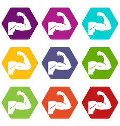 biceps icon set color hexahedron vector image