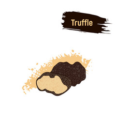 Colored sketch truffle mushrooms vector