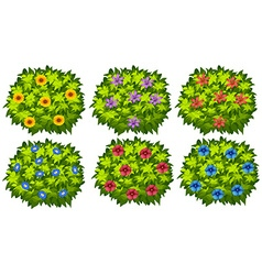 Green bush with colorful flowers vector image