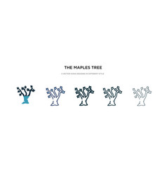 maples tree icon in different style two colored vector image