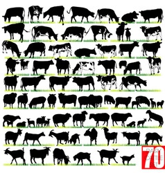 dairy cattle silhouettes set vector image