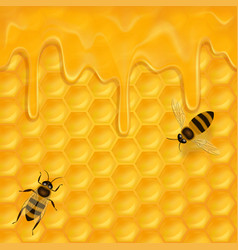horizontal seamless pattern with honeycomb vector image