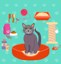 Cat and different pet care vector