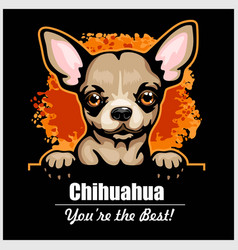 chihuahua - peeking dogs - breed face head vector image