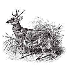 Gemul deer vintage vector