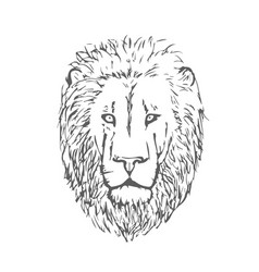 hand drawn lion head lion face vector image