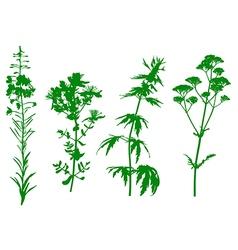 Herbal green vector