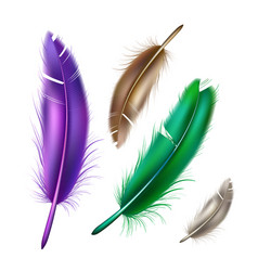 realistic peacock peafowl color feather set vector image