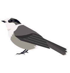 Wild birds canada gray jay isolated vector