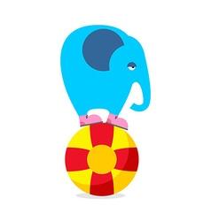 Blue elephant on ball Performing Circus animal Sad vector image vector image