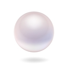 Isolated pearl vector image