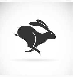 black rabbit is running on white background wild vector image