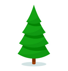 isolated christmas fir tree on white background vector image