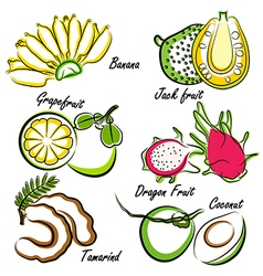Thai fruit3 vector