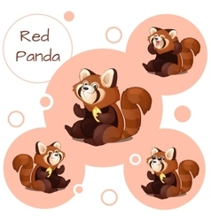 Cute red Panda with nuts vector image