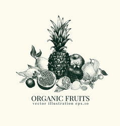 fruits hand drawn banner vector image