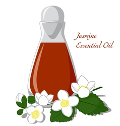 Jasmine essential oil vector