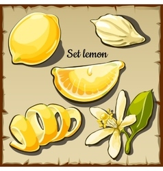 Set of lemon fruit drawn from different angles vector image