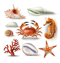 set of seashells coral crab vector image